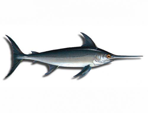 Un 2,7% de cuota para la captura fortuita de pez espada en el Mediterráneo