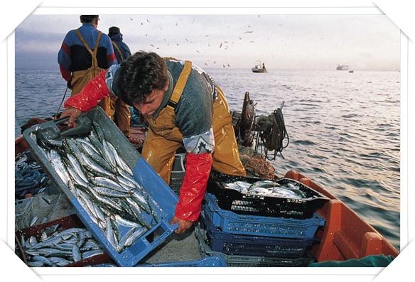 Prueba de aptitud de Marinero Pescador